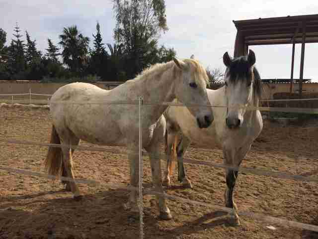Rescued horses in love at sanctuary
