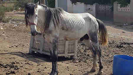 Neglected horse just before rescue in Spain