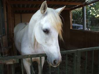 Rescued mare