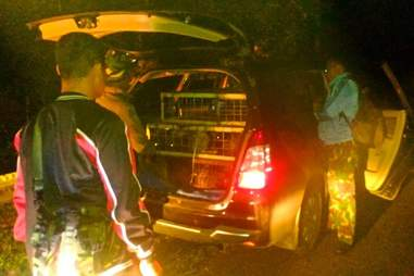 Truck full of smuggled porcupines