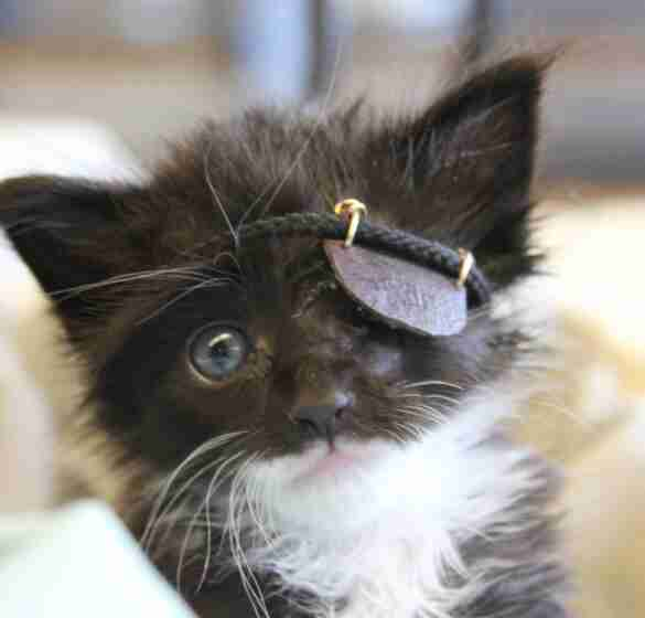 kitten with an eyepatch
