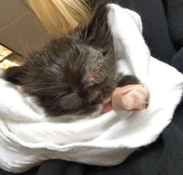 kitten with an eyepatch