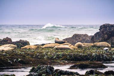 fitzgerald marine reserve