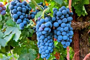 La Nebbia Winery