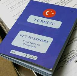 Pet passport for cat from Turkey
