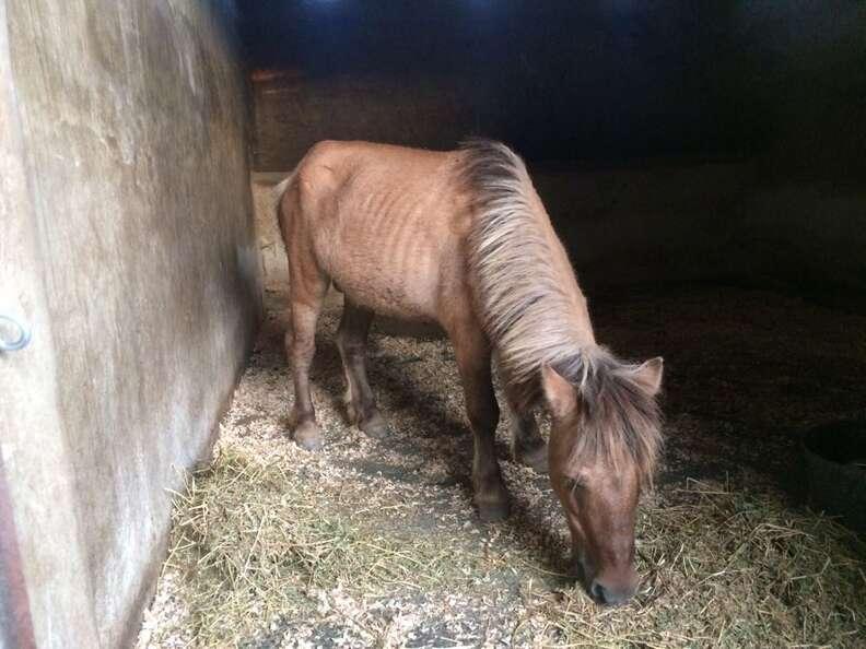 Pony at sanctuary