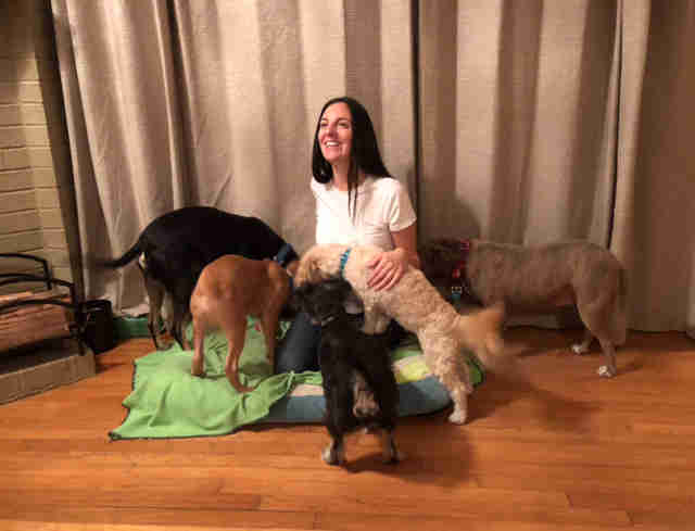woman with rescue and foster dogs