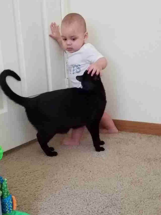 baby and cat growing up together