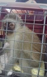 Rescue monkey in carrier