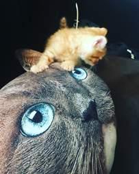 guy brings home kitten