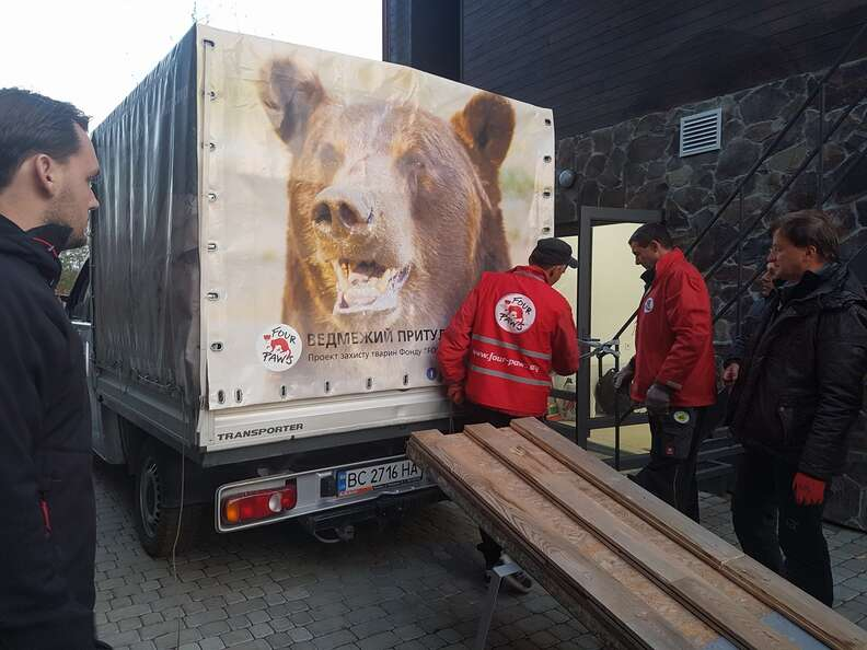 Captive bear loaded into rescuers' truck