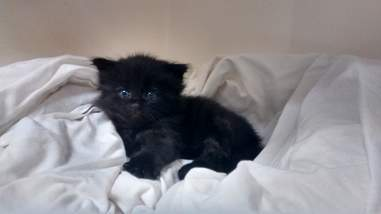 kitten rescued from compost pile