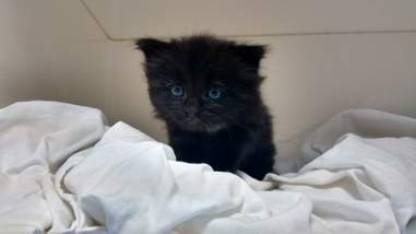 kitten rescued from compost heap
