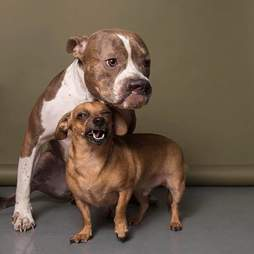 Two dogs posing together
