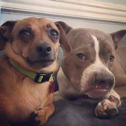 Two dogs together