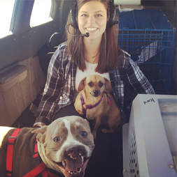 Two dogs on airplane