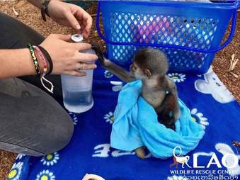 Baby monkey grabbing water bottle