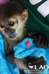 Baby monkey cuddling blanket