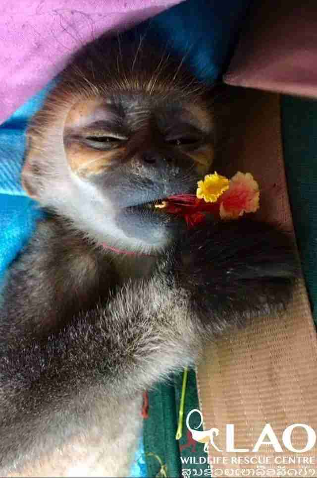 Baby monkey eating a flower
