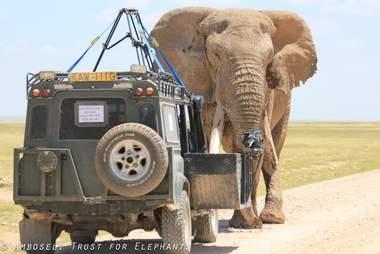 Car watching big tusker African elephant
