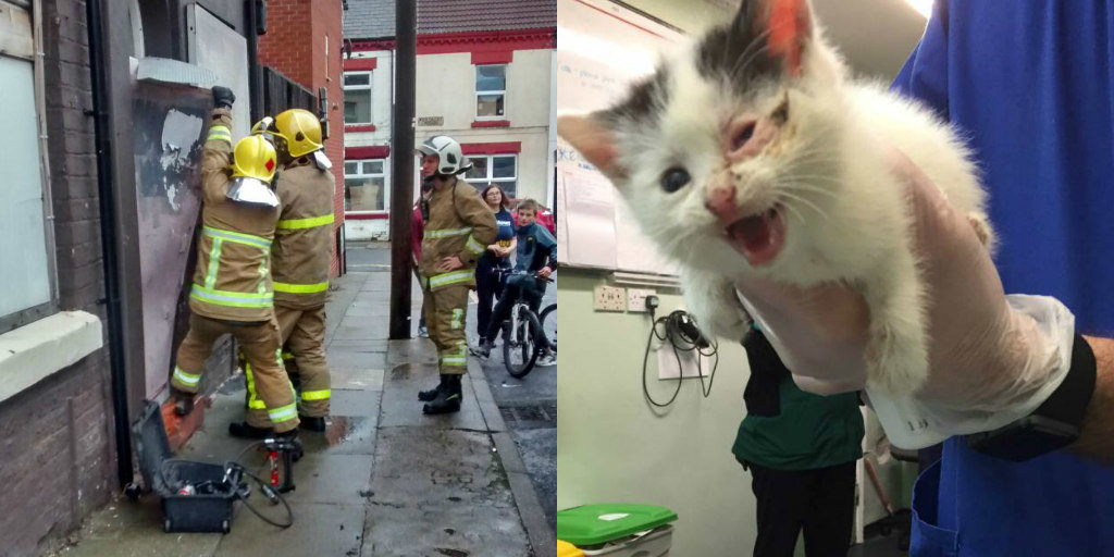 Kitten Trapped In Abandoned House Cried So Loud The Whole Street Heard Her