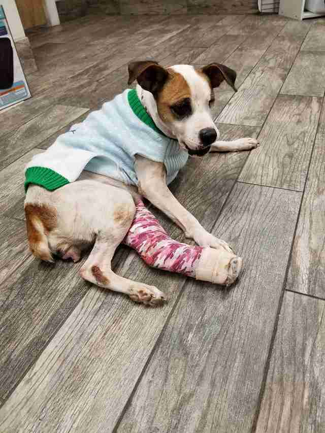 Rescued dog with cast on leg