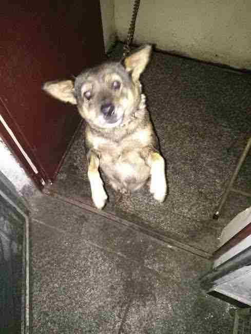 Abused dog chained on balcony