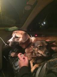 Rescued dogs inside car