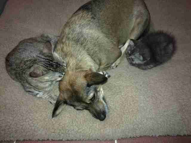 Rescue dog cuddling with cats