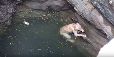 dog falls into well