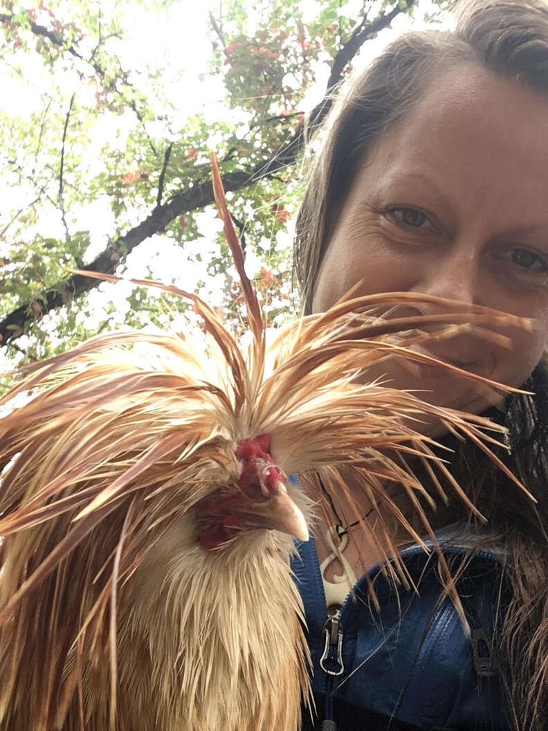 Hiker rescues rooster