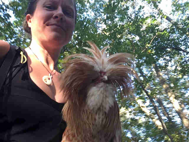 Rooster rescue on Applachian Trail