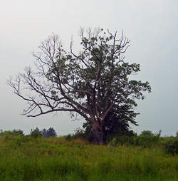 The Devil's Tree