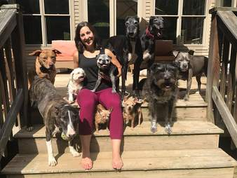 woman with a bunch of dogs