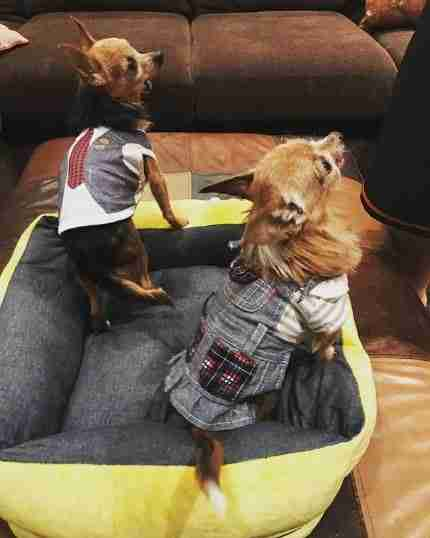 dogs wearing back to school outfits