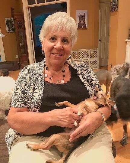 dog sitting on elderly woman's lap