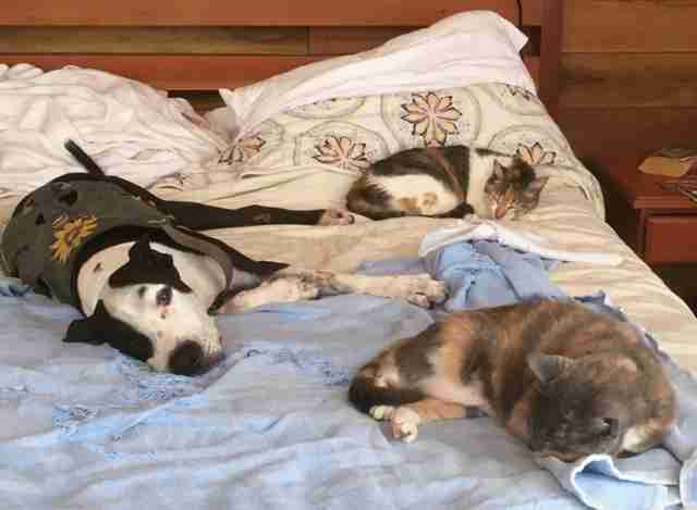 Dog and cats sleeping on bed