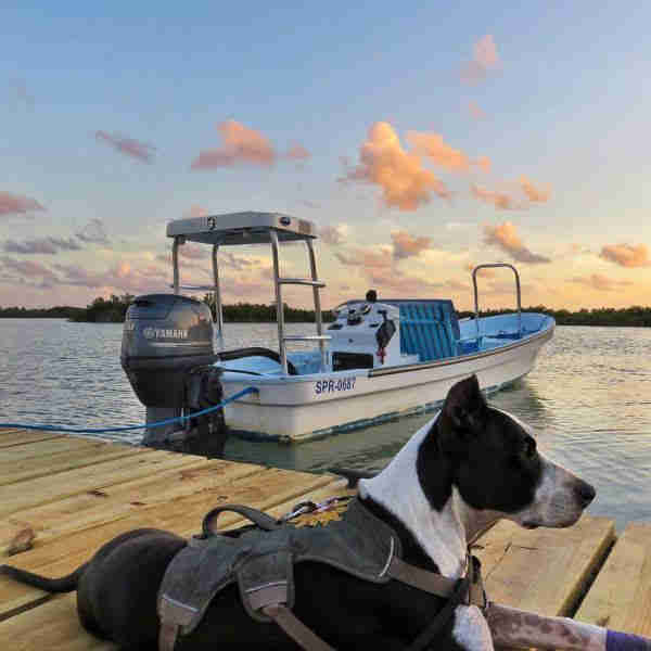 Rescue dog on boat dock