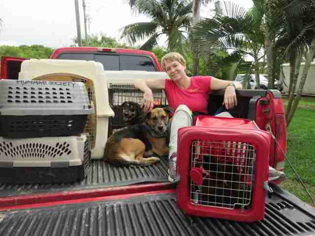Woman sitting with crated dogs