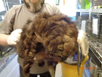Rescued cat with matted fur