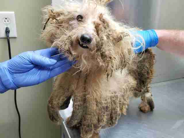 Rescued dog with matted fur