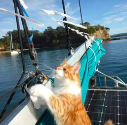 Cat on sail boat