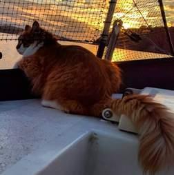 Cat on sailboat at sunset