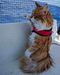 Cat on sailboat
