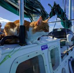 Rescue cat on sailboat