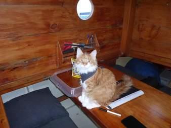 Cat in harness in boat cabin