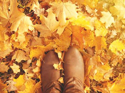 buy fall leaves