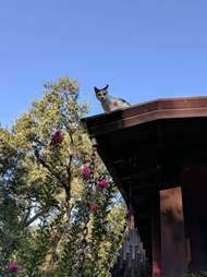 Cat on roof of house