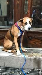 stray dog on stoop