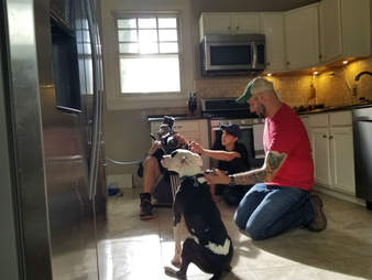 dog on movie set